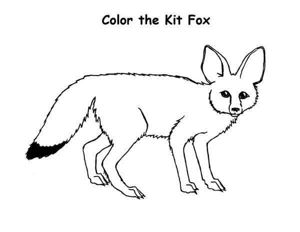 Fox, : Color the Kit Fox Coloring Pages