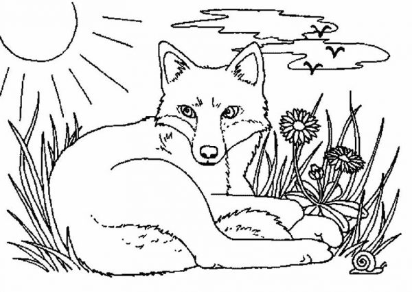 Fox, : Fox Rest Before Hunting Coloring Pages