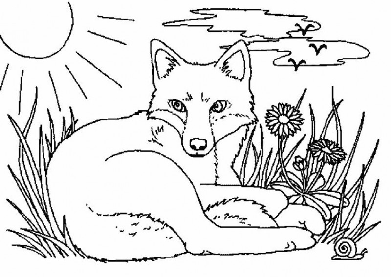 fox fox rest before hunting coloring pages fox rest before hunting coloring pagesfull size - Hunting Coloring Pages