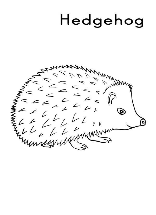 h is for hedgehog coloring pages