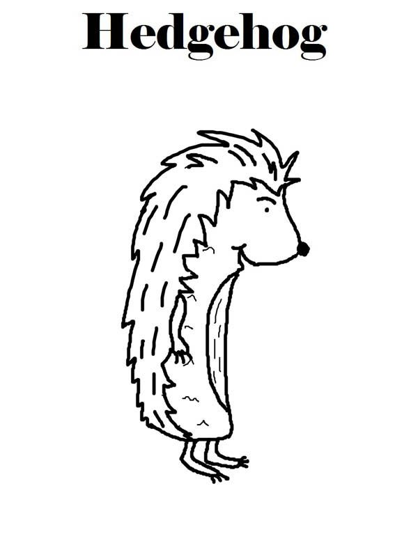 Hedgehogs, : Hedgehog Coloring Page