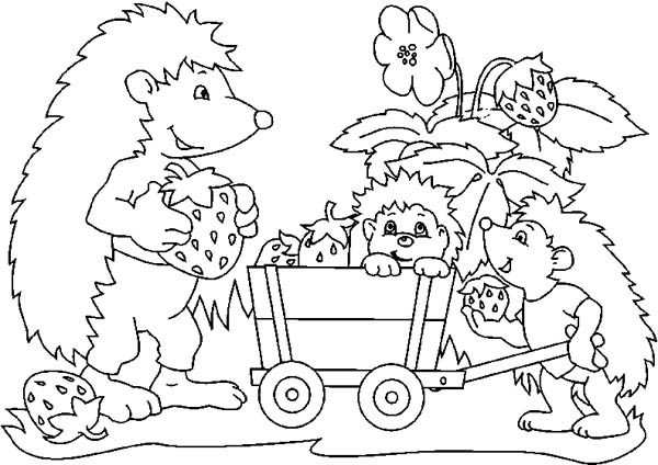 Hedgehogs, : Hedgehog Harvest Strawberry with His Family Colouring Pages