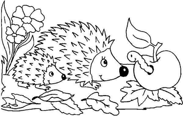 Mother Hedgehog Her Baby Meet Caterpillar Colouring