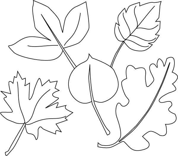 Leaves, : Autumn Dry Leaves Coloring Pages