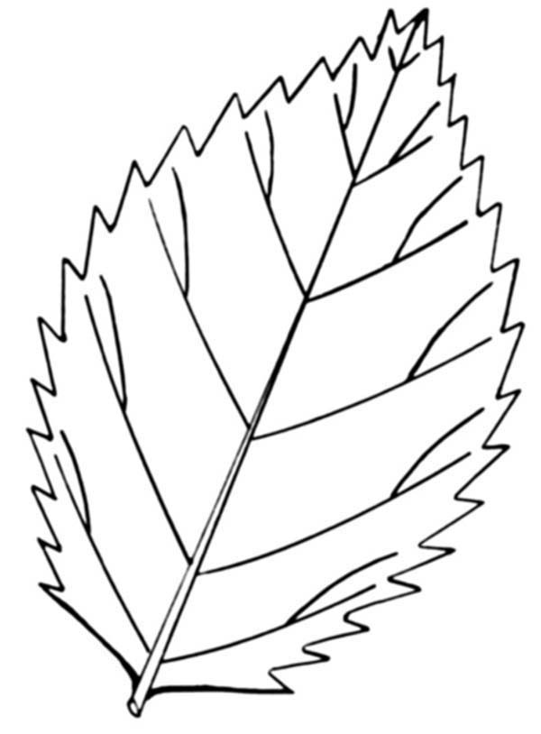 Leaves, : Autumn Leaves Falling Coloring Pages
