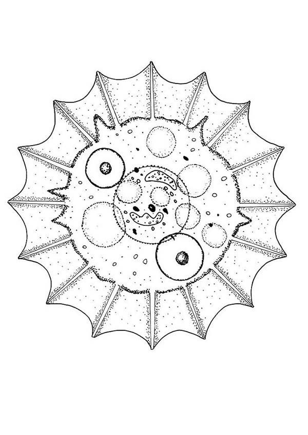 Cell Mandala Animal Coloring Pages