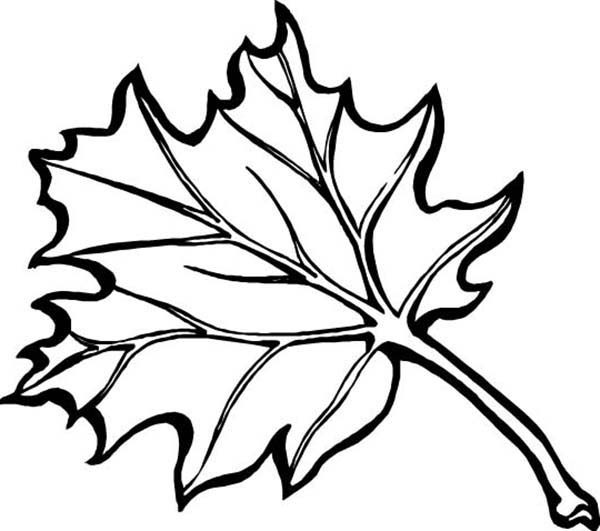 Leaves, : Drawing Autumn Leaves Coloring Pages