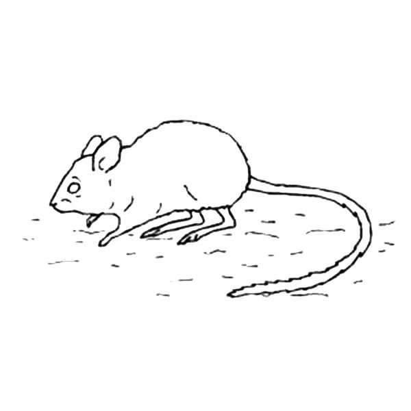 Mouse and Rat, : Drawing Mouse and Rat Coloring Pages