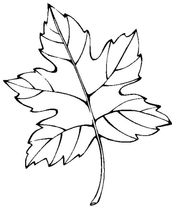 Leaves, : Fall Season Leaves Picture Coloring Pages