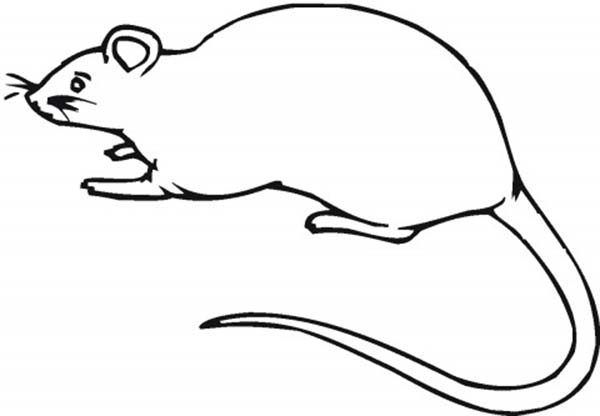 Mouse and Rat, : Food Stealer Mouse and Rat Coloring Pages