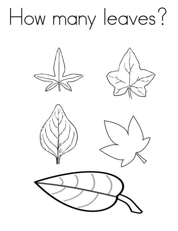 Leaves, : How Many Leaves Coloring Pages