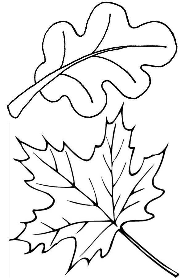 Leaves, : How to Draw Leaves Coloring Pages