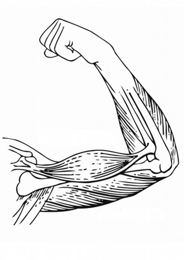 Human Anatomy Hand Coloring Pages