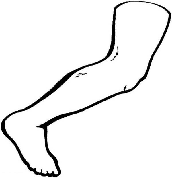 Human Anatomy Leg Coloring Pages