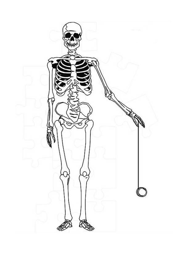 Human skeleton free colouring pages for Skeleton coloring pages