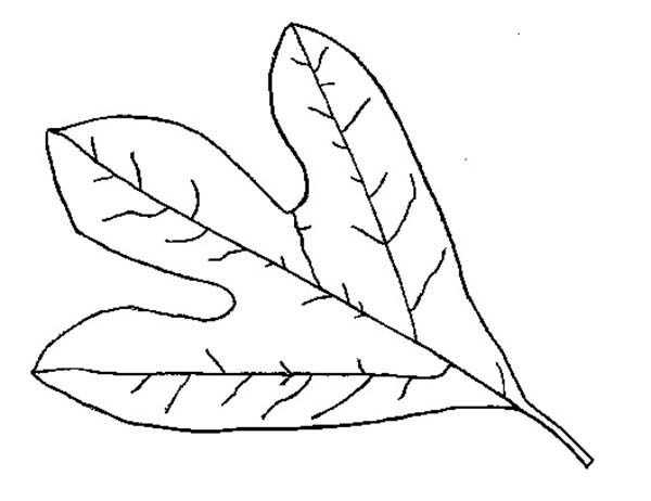 Leaves, : Introducing Autumn Leaves Coloring Pages