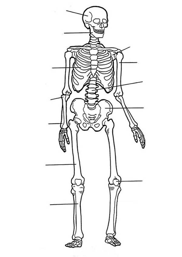 Human skeleton free colouring pages for Bone coloring page