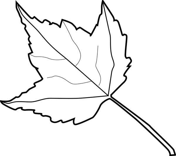 Leaves, : Learn aabout Autumn Leaves Coloring Pages
