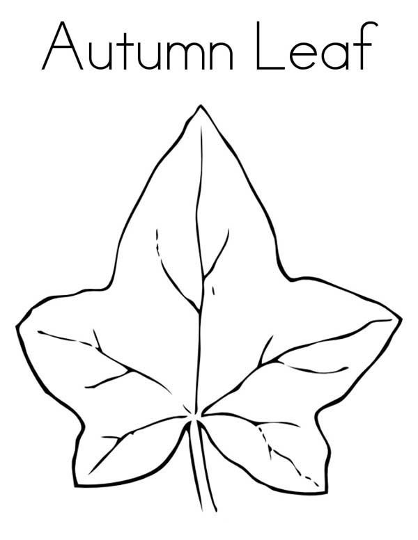 Leaves, : Leaves from Autum Season Coloring Pages