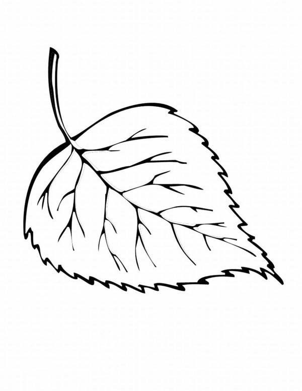 Leaves, : Leaves from Autumn Coloring Pages