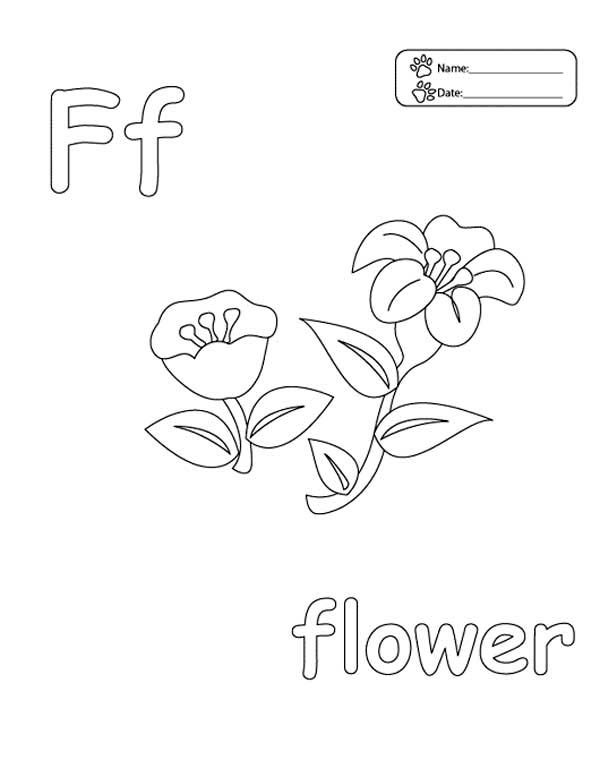 Letter F, : Letter F is for Flower Coloring Page