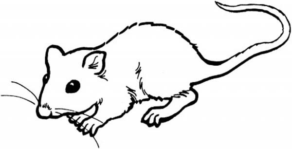 Mouse and Rat, : Little Mouse and Rat Coloring Pages