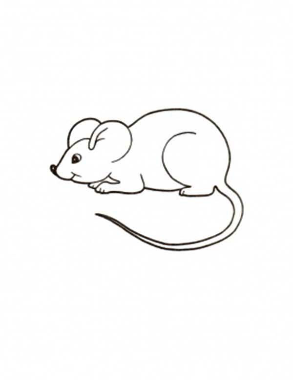 Mouse and Rat Coloring Pages for Kids Bulk Color