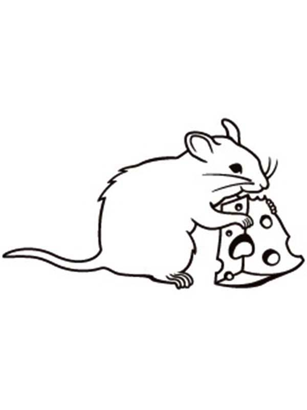 cute rats colouring pages - photo #37
