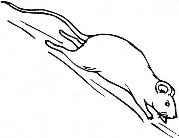 Mouse and Rat, : Mouse and Rat Running Scared Coloring Pages