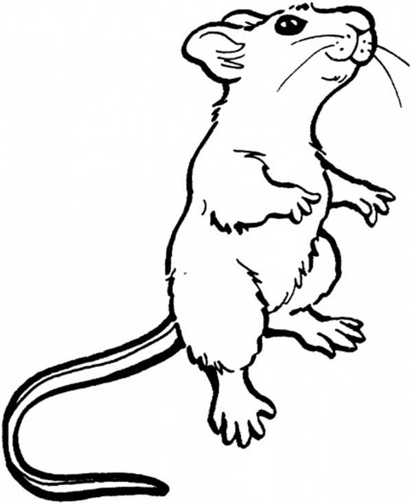 Mouse and Rat, : Mouse and Rat Smelling Food in Distance Coloring Pages