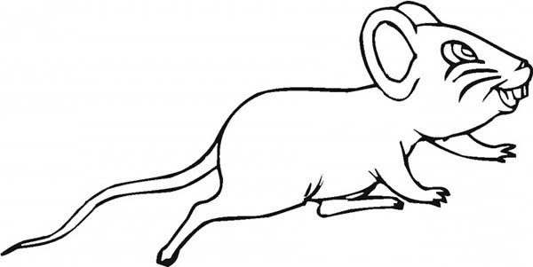 Mouse and Rat, : Mouse and Rat and His Sharp Teeth Coloring Pages