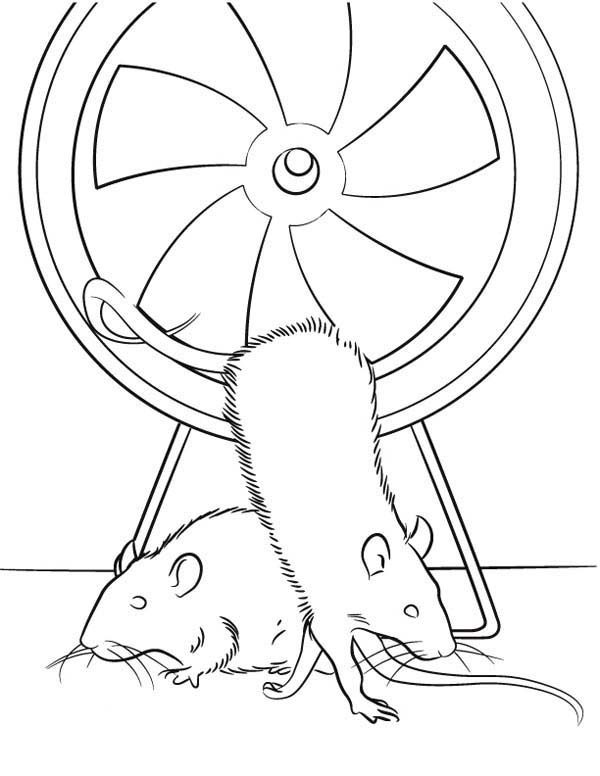 Mouse and Rat, : Mouse and Rat in Exercise Wheel Coloring Pages