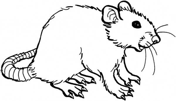 Mouse and Rat is Smiling Coloring Pages Bulk Color