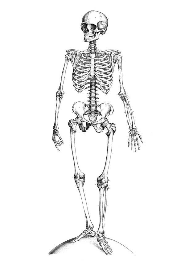 Perfect Human Anatomy of Bones Coloring Pages Bulk Color