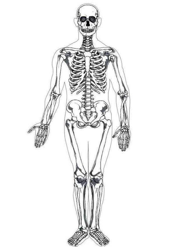 Human Anatomy Photo Skeleton In Coloring Pages