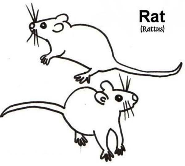 Picture of Mouse and Rat Coloring Pages Bulk Color