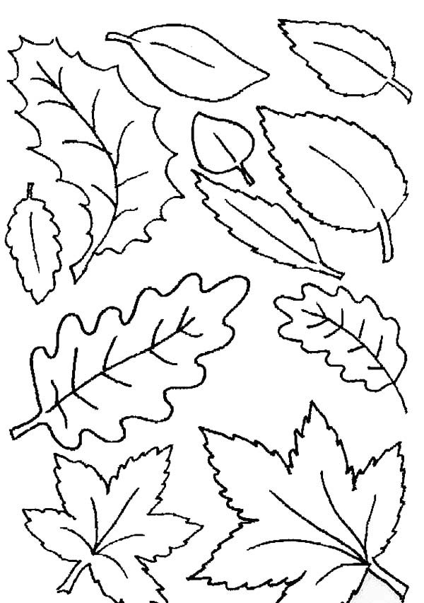 Leaves, : Various Leaves Fall in Autumn Coloring Pages
