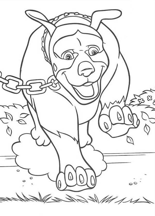 coloring pages over the hedge - photo#21