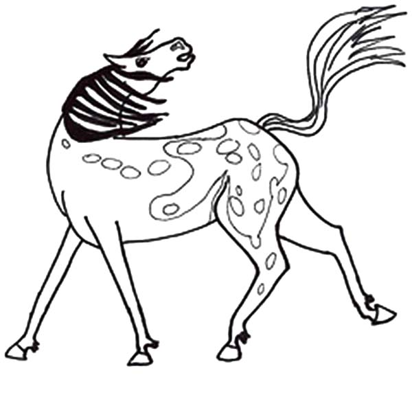 Appalooshorse, : Appalooshorse Coloring Pages for Kids