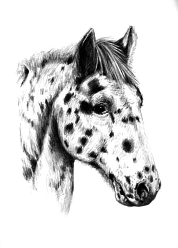 Appalooshorse, : Appalooshorse Head Coloring Pages