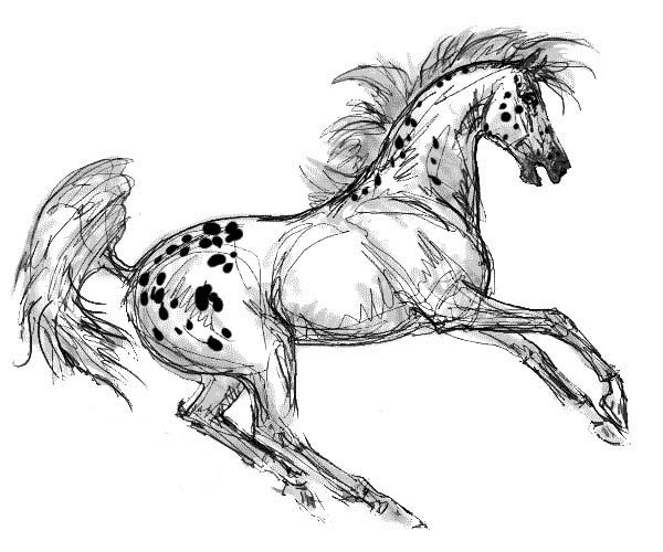 Appalooshorse, : Appalooshorse Painting Coloring Pages