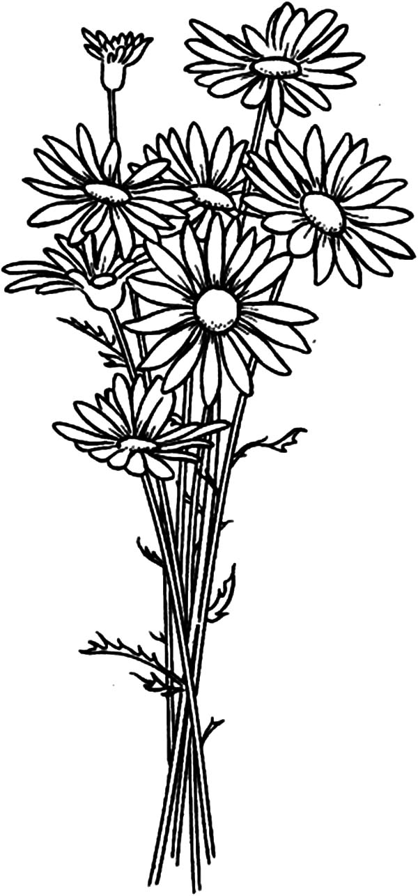 Aster Flower, : Aster Flower Bouquet Coloring Pages