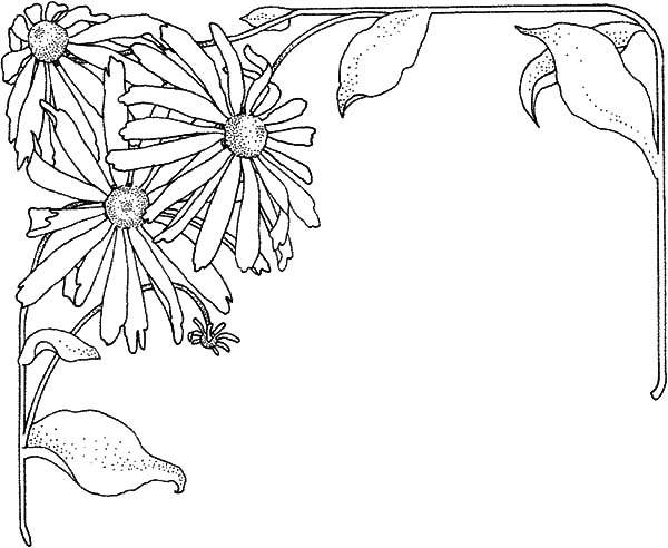 Aster Flower, : Aster Flower Frame Coloring Pages