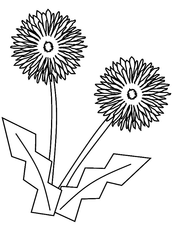 Aster Flower, : Aster Flower Origami Coloring Pages