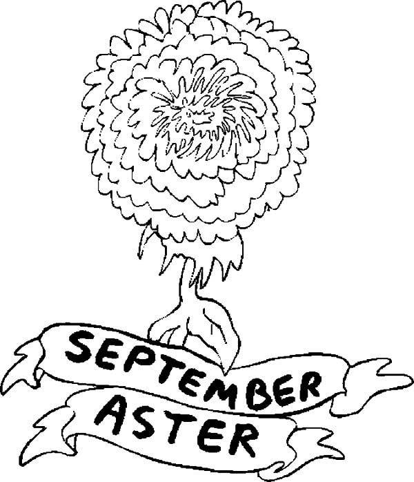 Aster Flower for September Coloring Pages | Bulk Color