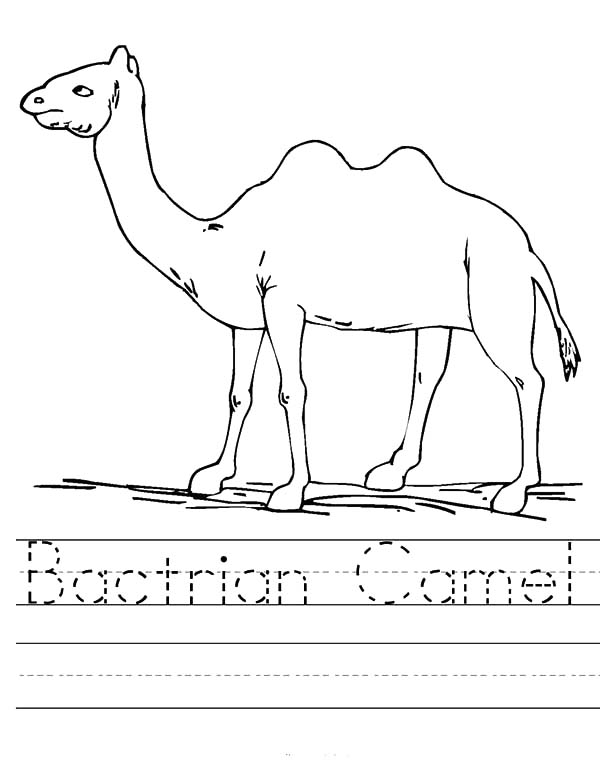 Bactria Camel, : Bactria Camel Worksheet Coloring Pages