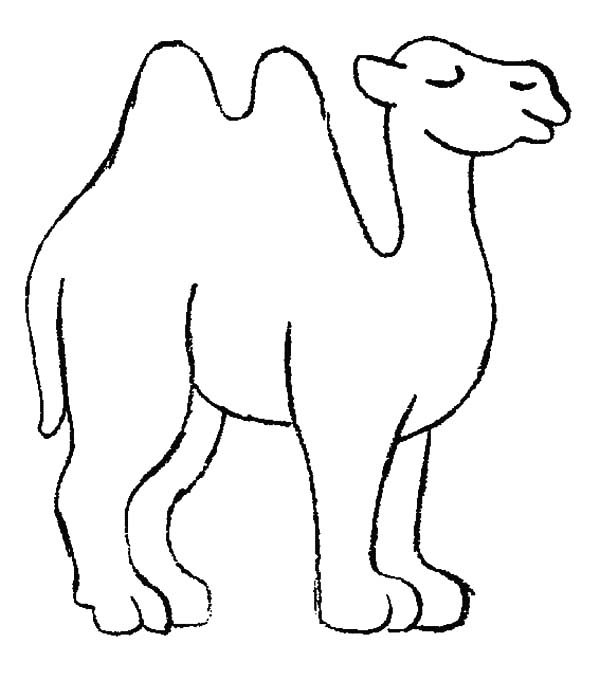 Bactria Camel, : Bactria Camel is Resting After Long Journey Coloring Pages