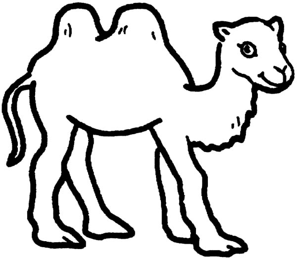 Bactria Camel, : Bactria Camel is Smiling Coloring Pages