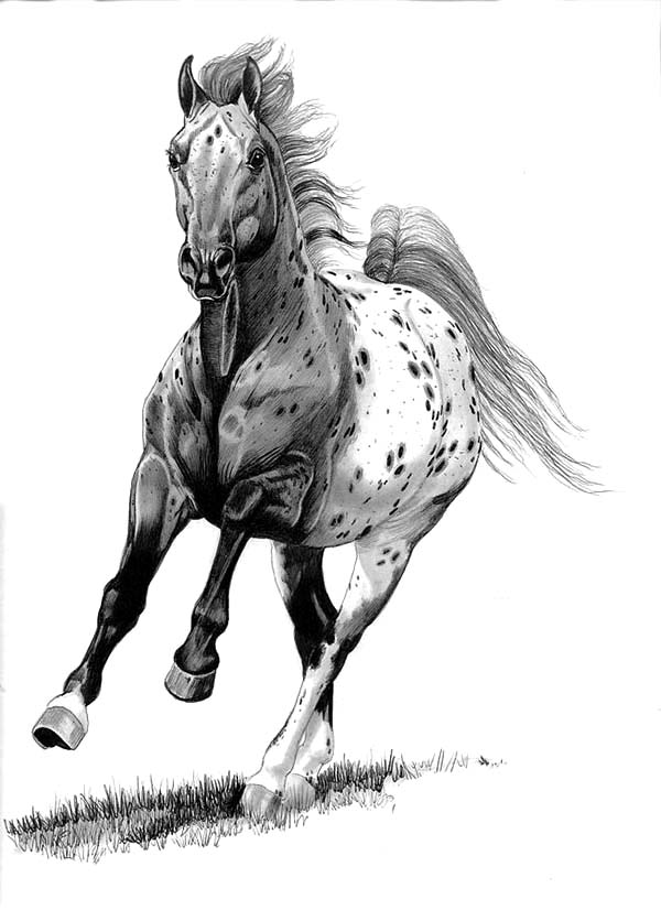Appalooshorse, : Blanketed Appalooshorse Coloring Pages