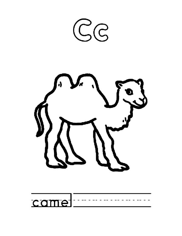 Bactria Camel, : C is for Bactria Camel Coloring Pages